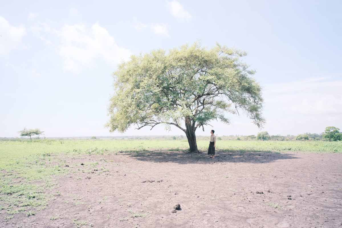 Pohon di tanah gersang