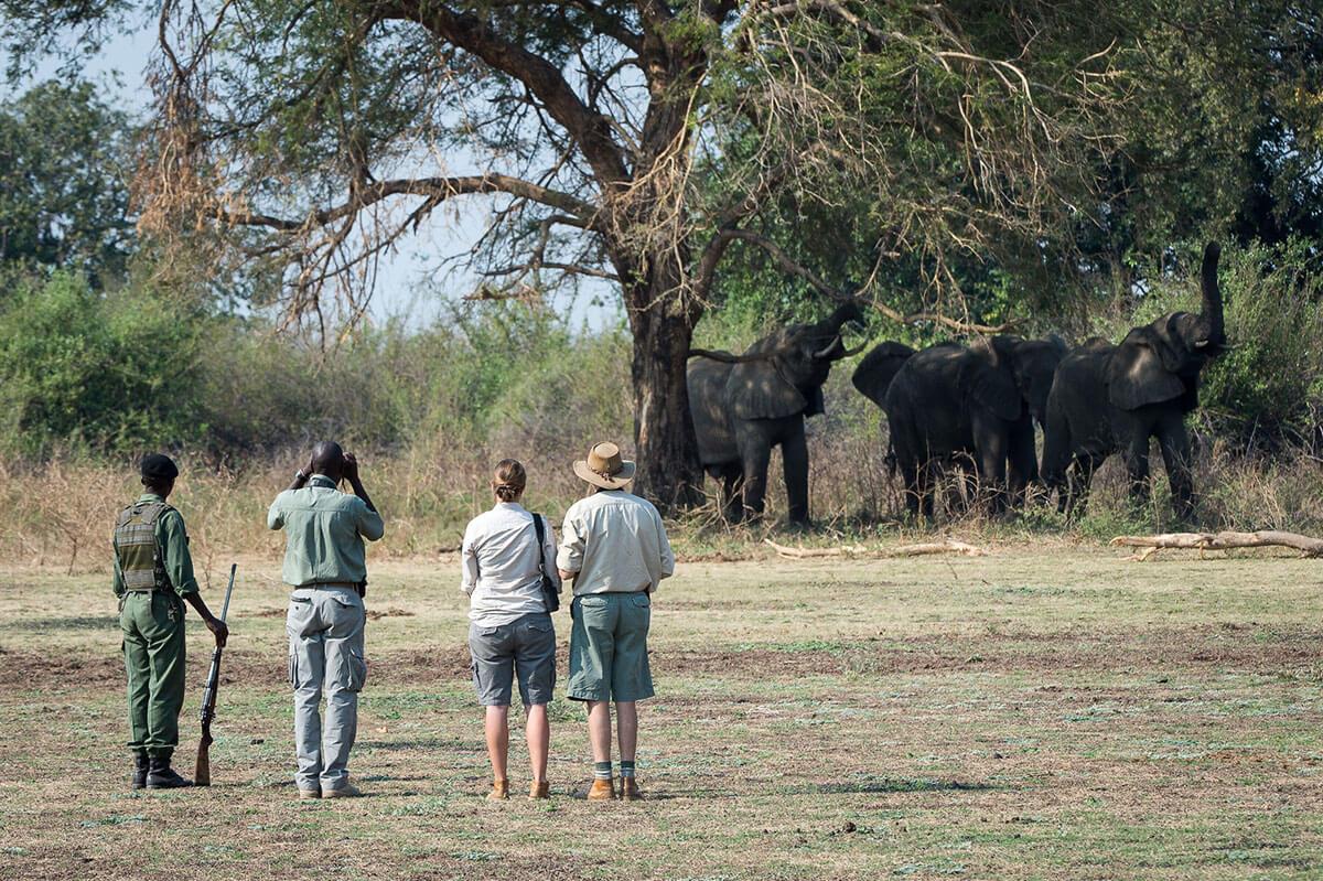 Bushcamp – Zambia